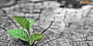 breakout altcoin rastlina rastie zem